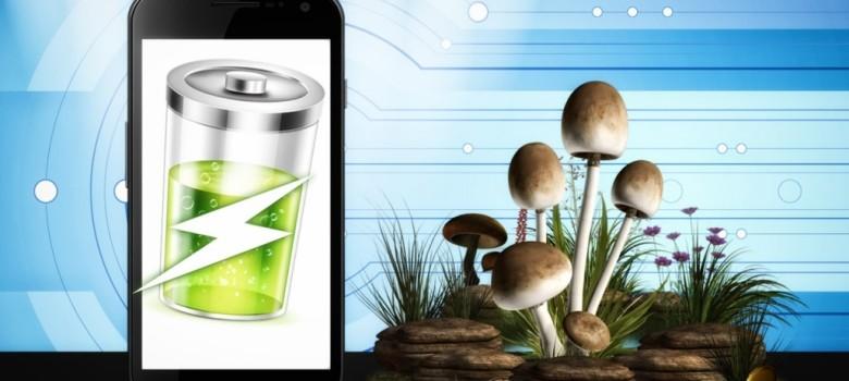 Power Future Smart Phones with the Help of Mushroom