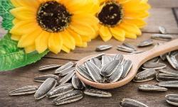 Sunflower Seeds Market