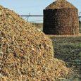Cellulosic Ethanol Market