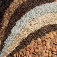 Crop Seeds Market