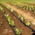 Microirrigation Systems Market