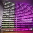 Plant Factory Grow Lights and Controls