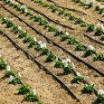 Trickle Irrigation System Market