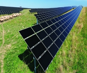 C-Si A-Si CIGS Solar Cell and Module Market