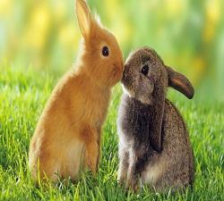 Rabbit Market