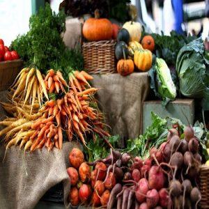Solanaceae Vegetable Seed Market
