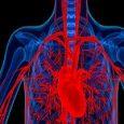 Transplant Diagnostics