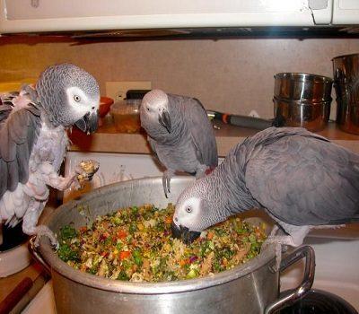 Pet Bird Food Treats Market
