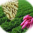 Organic Compound Fertilizer Market